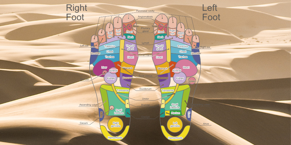 reflexology foot chart, reflexology map, foot reflexology chart, download